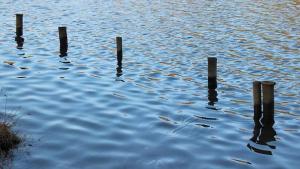 Ein Pfahl steckt mit 30 % seiner Länge im Grund eines Sees. 40 % seiner Länge werden von Wasser umspielt. (Grafik A221201 im Aufgabensatz 12 Blatt 2/2 Fortgeschritten zum Grundwert in der Prozentrechnung/© by www.fit-in-mathe-online.de)